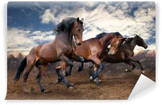 Vinyl Wall Mural wild jump bay horses