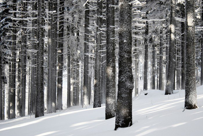 Wall Mural   Vinyl Winter Forest Scene   Styles Part 68