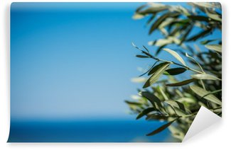 Vinyl Wall Mural Young green olives hang on branches