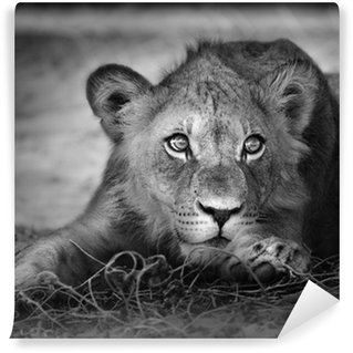 Wall Mural - Vinyl Young lion portrait