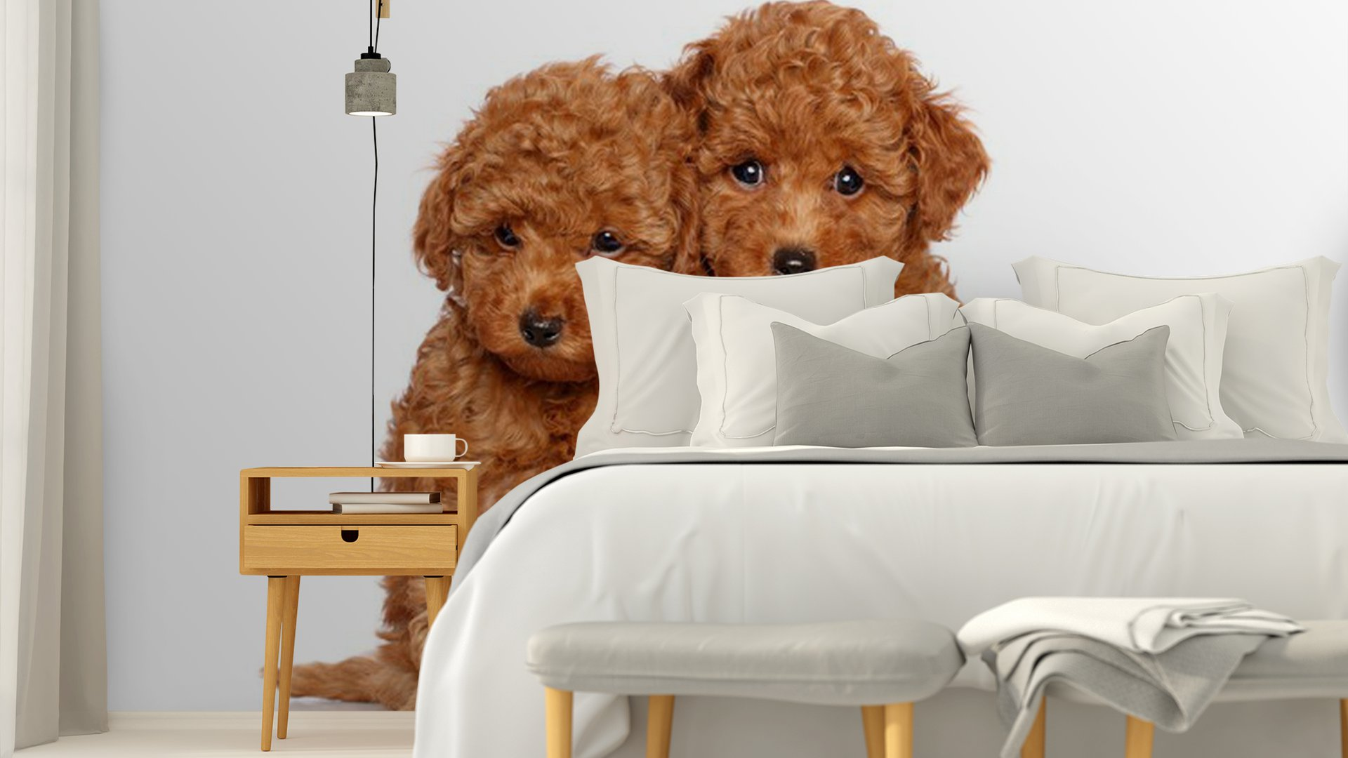 poodle wallpaper for walls - photo #25