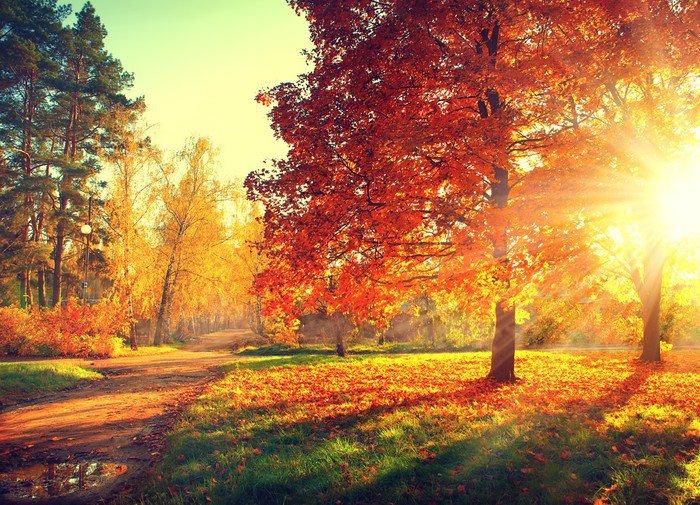 Autumn scene fall trees and leaves in sun light vinyl for Autumn tree mural