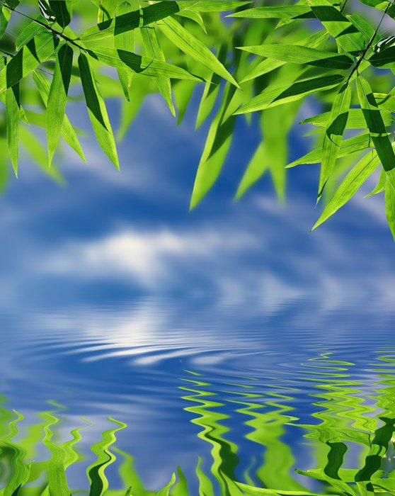 Bamboo And Sky Reflected In The Water Zen Atmosphere