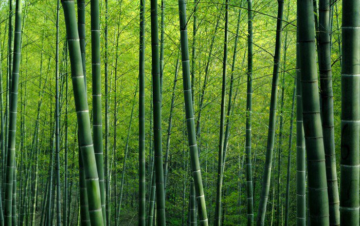 Bamboo forest vinyl wall mural pixers we live to change for Bamboo forest mural