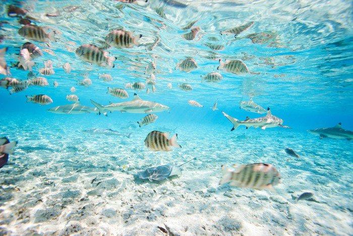 Bora bora underwater vinyl wall mural pixers we live for Bora bora wall mural