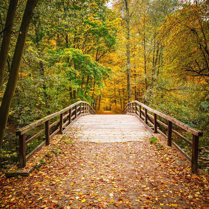 Bridge in autumn forest vinyl wall mural pixers we for Autumn forest mural