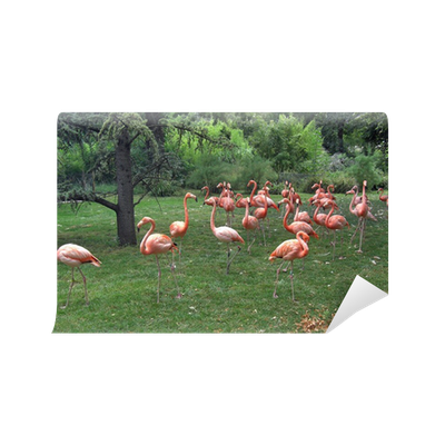 flamants roses jardin des plantes vinyl wall mural pixers we live to change. Black Bedroom Furniture Sets. Home Design Ideas