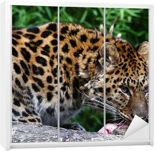 Amur Leopard A Critically Endangered Species Hubpages