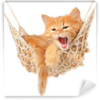 Washable Wall Mural Cute red-haired kitten in hammock