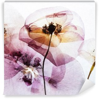 Washable Wall Mural dry poppies