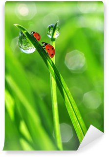 Washable Wall Mural fresh morning dew and ladybirds