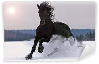 Washable Wall Mural Frisian horse on snow