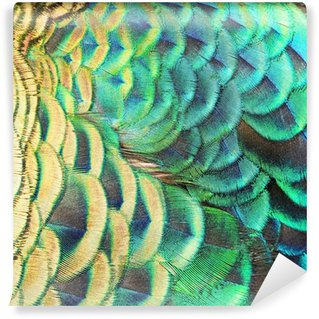 Washable Wall Mural Green Peacock feathers