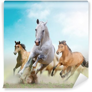Washable Wall Mural horses