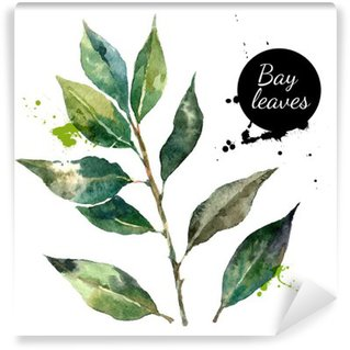 Kitchen herbs and spices banner. Vector illustration. Watercolor Washable Wall Mural