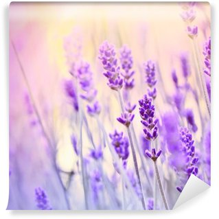 Washable Wall Mural Lavender lit by sun rays