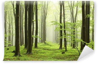 Spring beech forest in the mountains Washable Wall Mural