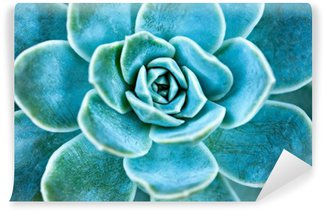 Succulent plant leaves. Washable Wall Mural