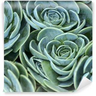succulent plant Washable Wall Mural