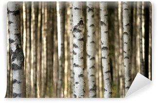 Washable Wall Mural trunks of birch trees