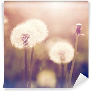 Vintage dandelions on meadow Washable Wall Mural