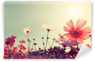 Washable Wall Mural Vintage landscape nature background of beautiful cosmos flower field on sky with sunlight. retro color tone filter effect