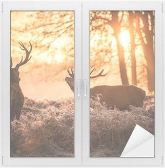 Window & Glass Sticker Red Deer in Morning Sun.