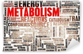 Yıkanabilir Duvar Resmi Metabolizma