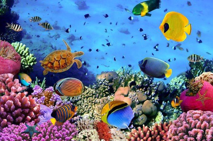 Obraz w Ramie Zdjęcie z koralowców kolonii -