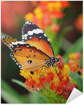Zelfklevende Poster Butterfly on oranje bloem in de tuin