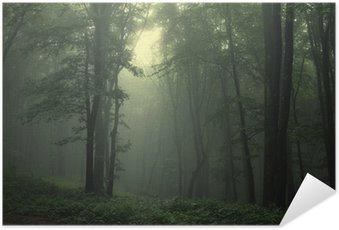 Zelfklevende Poster Groene bos na regen