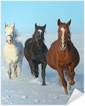 Zelfklevende Poster Horse