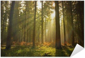 Zelfklevende Poster Prachtig bos