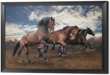 Dzikie konie laurowe skok