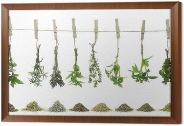 Świeże zioła wiszące na liny