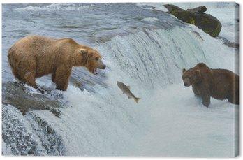 Brązowy niedźwiedź grizzly łososia w rzece polowania, Alaska, Katmai