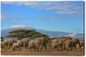 Kilimanjaro Z Herd Elephant