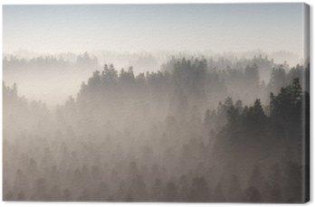 Gęsty las sosnowy w porannej mgle.
