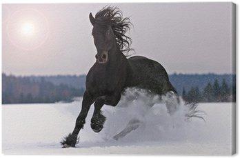 Frisian jazda na śniegu