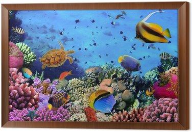 Zdjęcie z koralowców kolonii na Rafa, Egipt