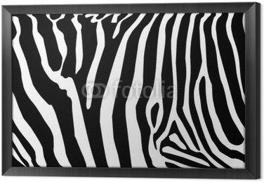 Vector - zebra tekstury czarny i biały