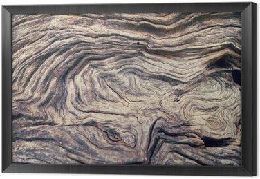 Kora drzewa tekstury drewna