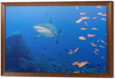 Szczęki rekina szare białe gotowe do ataku pod wodą