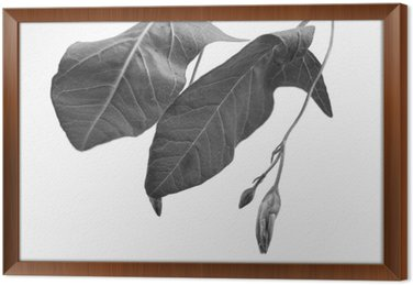Black and white macrophoto of plant object with depth of field