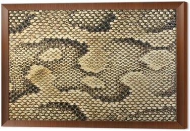 Tekstury skóry węża