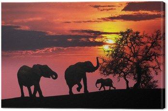 Rodzina słoń o zachodzie słońca