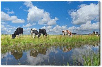 Krowy na pastwisku przez rzekę nad błękitne niebo