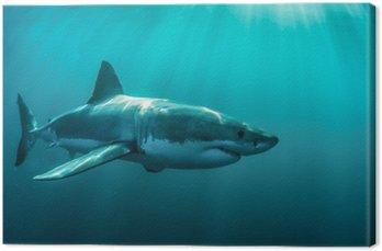 Great White Shark podwodne