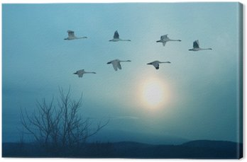 Spring or autumn migration of cranes
