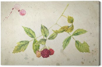 A branch of raspberry - realistic watercolor painting. On vintage beige background.